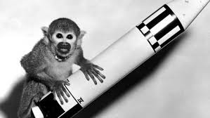 iran monkey to space